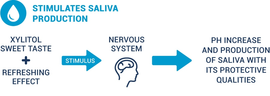 illustration showing how xylitol helps saliva production
